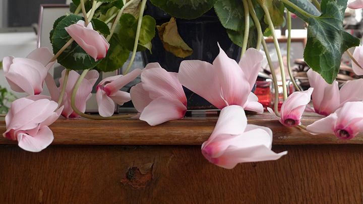 pinkflowerswp