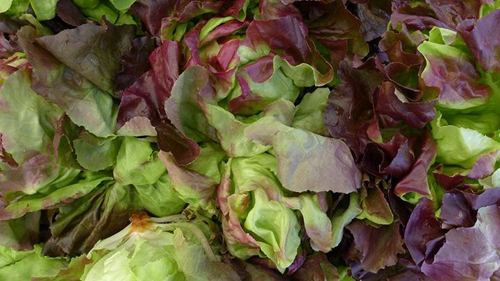 lettuceswp